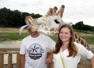 Image of a giraffe photobombing a couple