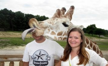 Image of a giraffe photobombing a couple