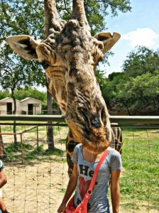 Image of girl with giraffe