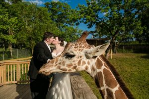 Image of newly wed couple with Giraffe photobombing