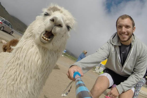 image of a man phobobombed by an anger alpaca
