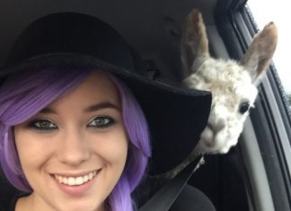 Image of girl with Alpaca photobomb