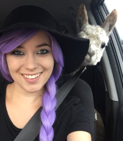 image of a woman photobombed by a cute alpaca